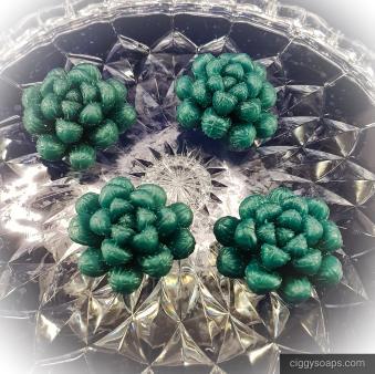 medsucculents